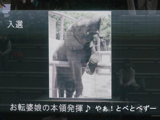 とべ動物園写真コンクール入選♪