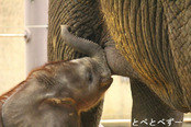 とべ動物園写真コンクール:入賞「おいしいで賞」