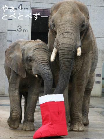 とべ動物園アフリカゾウの親子:リカ母さんと末娘の砥愛ちゃん