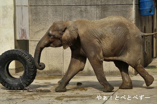とべ動物園ブログ:媛、ニコ、フー、ピース、ティア