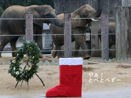 アフリカゾウのイベント:ゾウへクリスマスプレゼント
