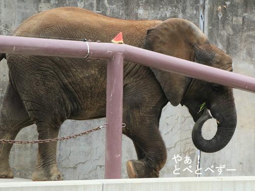 とべ動物園ブログ:やぁ!とべとべずー