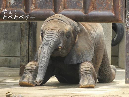 とべ動物園ブログ:砥愛、ピース、柑太郎、砥々丸、ハヤト、ティア