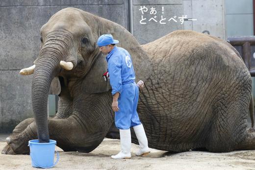 とべ動物園ブログ:リカ、ピース、柑太郎、砥々丸
