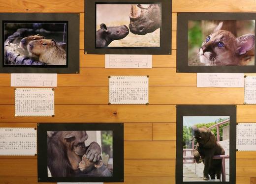 とべ動物園写真コンクール作品展:上位入賞作品