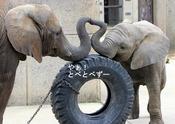 第6回とべ動物園写真コンクール:入選♪