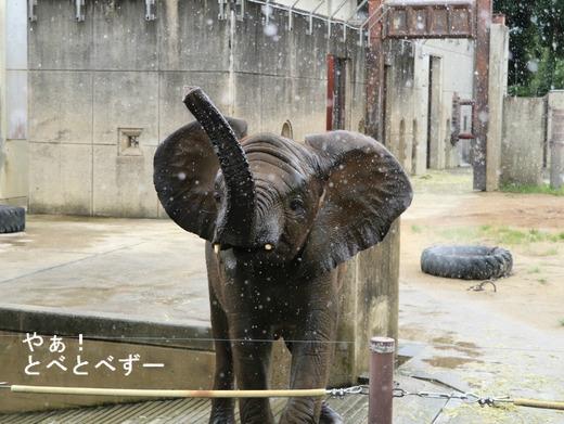 とべ動物園ブログ:砥愛、ピース、柑太郎、ティア、ハヤト、タフ