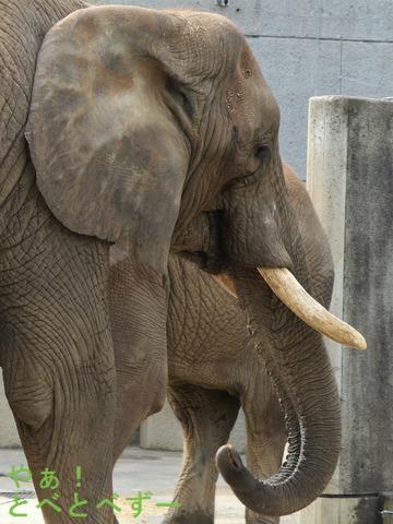 とべ動物園ブログ:リカ、クー、ピース、フー、ティア、ハヤト