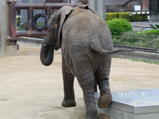 アフリカゾウ大好きブログ:やぁ!とべとべずー