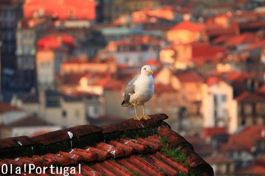 「レトロな旅時間ポルトガルへ」のカメラマンのブログ