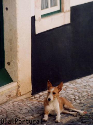 ポルトガルの白い家:灰色のラインは宗教