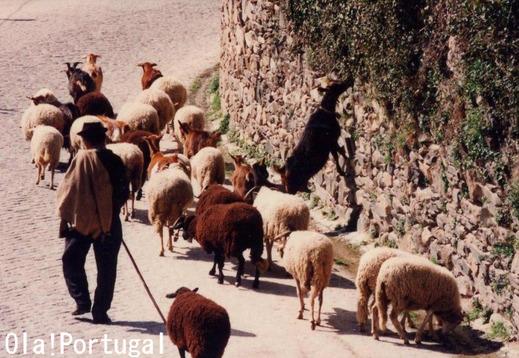 ポルトガル伝説:羊飼いと星