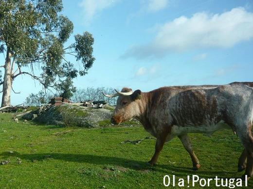 ポルトガル旅行記:アレンテージョ地方(クラト)