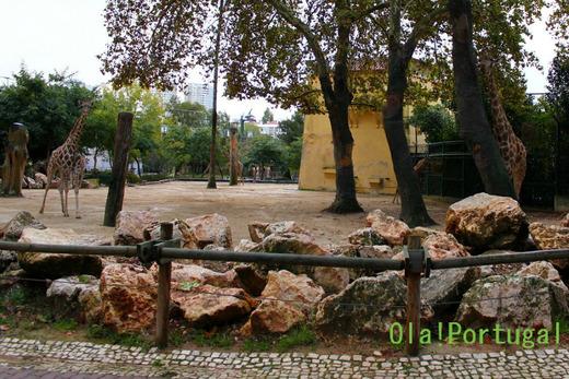 動物園の展示方法:無柵放養式展示(ポルトガル)