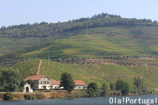 ポルトガル・ワイン、ブドウ農園キンタ
