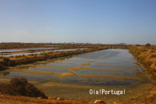 ポルトガルの塩田:アルガルヴェ地方(ファーロ)