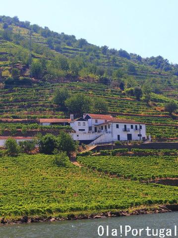 ポルトガルワインの生産地域:Douro ドウロ