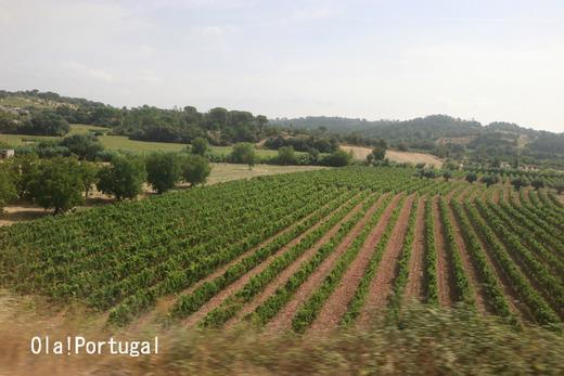 ポルトガルの車窓から:リスボン~ポルト~ギマランイス