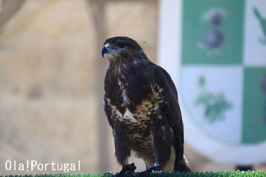 ポルトガル旅行ブログ:Ola! Portugal 与茂駄とれしゅ