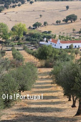 ポルトガル旅行記:アライオロスのポザーダ