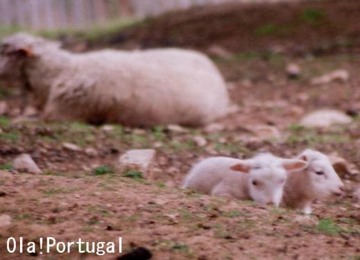 ポルトガルで見かけた動物