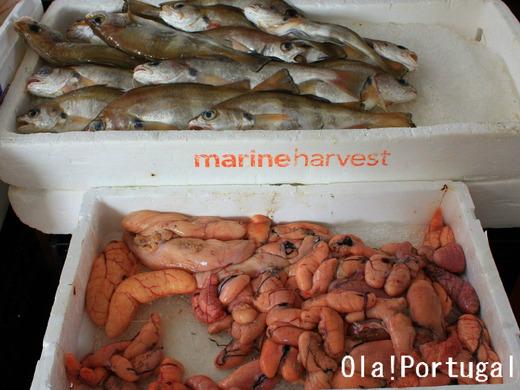 ポルトガルの魚料理:魚卵