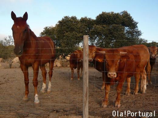 ポルトガル旅行記:アレンテージョ地方