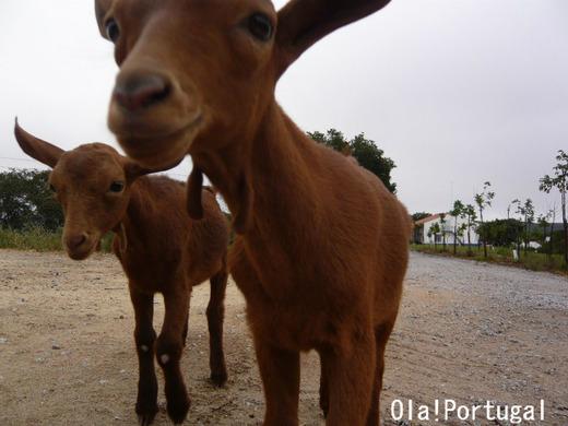 ポルトガルの動物たち