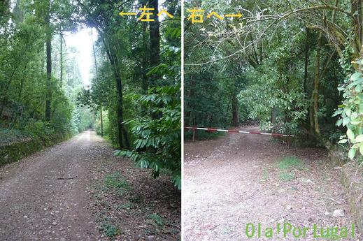 ブサコの森散策