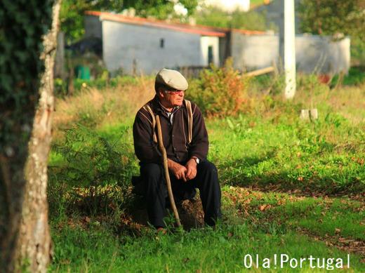 ポルトガルの牧畜風景:羊飼いのおじさん