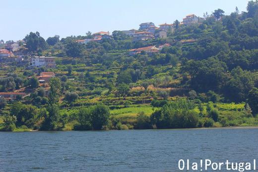 世界遺産:ドウロ川上流ワイン生産地域(ポルトガル)