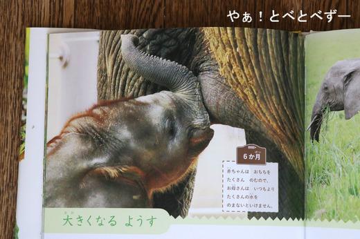 アフリカゾウ・赤ちゃん象の砥愛ちゃんの写真を提供