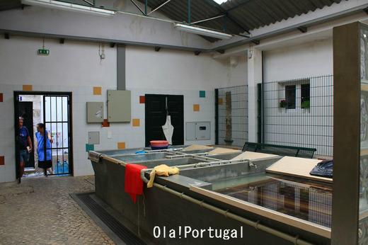 リスボンの個人ガイドのご紹介:ArToursPortugal