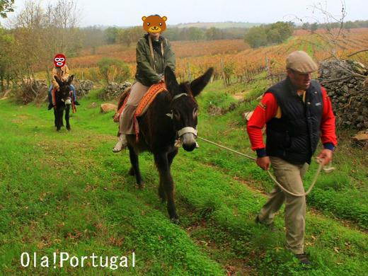 ポルトガル旅行&情報ブログ:Ola! Portugal