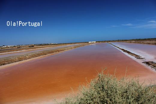 ポルトガルの天然の塩を作る塩田:タヴィラ