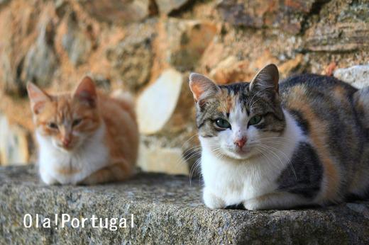 ポルトガルにゃんこ