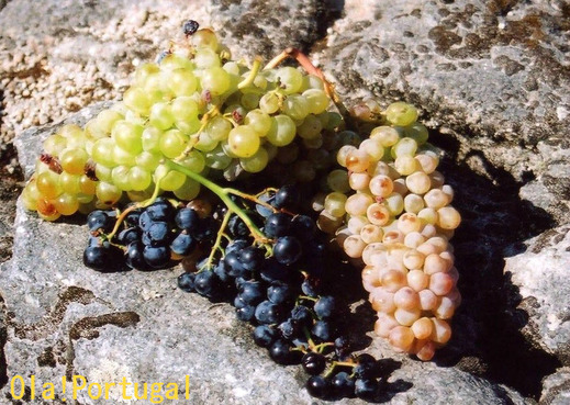 ポルトガルでワイン作り体験