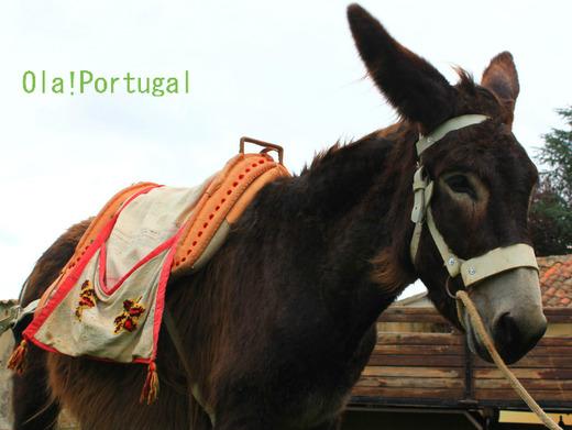 ポルトガル情報&旅行記:Ola! Portugl