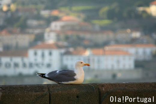 ポルトガルの動物:カモメ