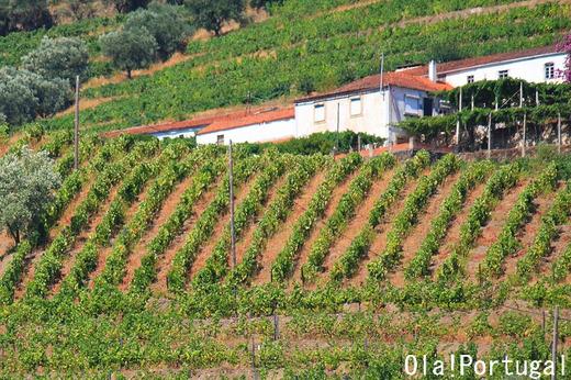 ポルトガルのワイン農園に泊まろう