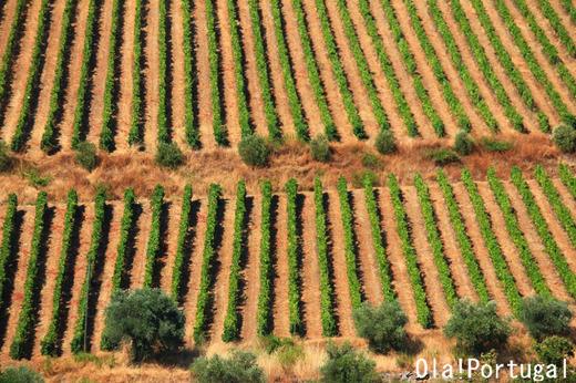 ポルトガルの世界遺産:ドウロ川流域のワイン生産地域