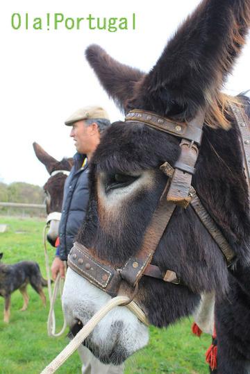 ポルトガル旅行記:ロバの体験乗驢馬(乗馬)