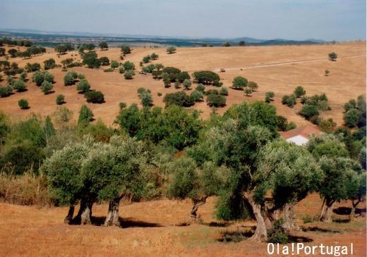 ポルトガル旅行記:アレンテージョ地方の牧歌的風景(アライオロス)