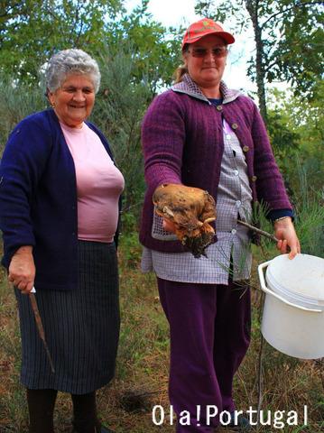 ポルトガルのキノコ狩り