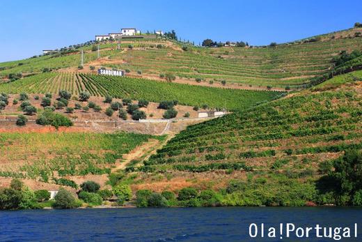 ポルトガルの世界遺産:ドウロ川上流ワイン生産地域