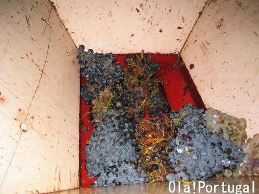 ポルトガルの世界遺産:ドウロ川流域のワイン栽培地域