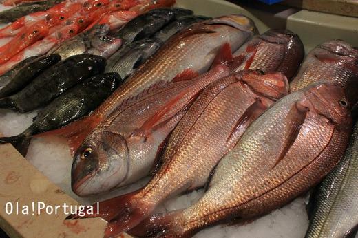 ポルトガルの魚市場見学記
