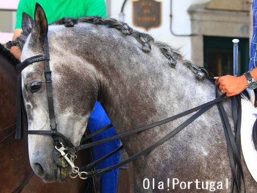 ポルトガルの動物:馬