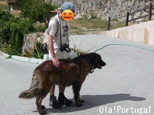 ポルトガルの犬:エストレーラ犬