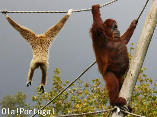 海外の動物園視察:行動展示(ポルトガル・リスボン動物園)